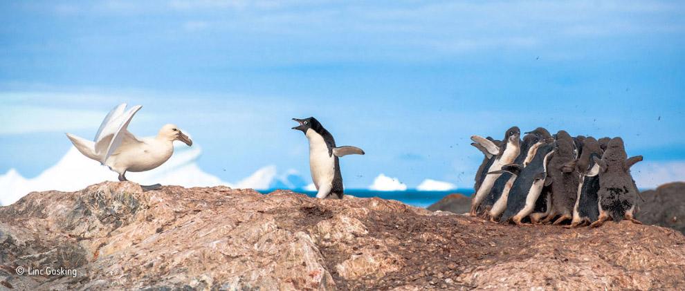 Лучший фотограф дикой природы 2015 - Wildlife Photographer of the Year