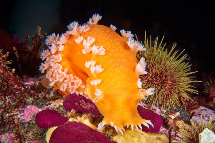 Жители глубин подводного мира
