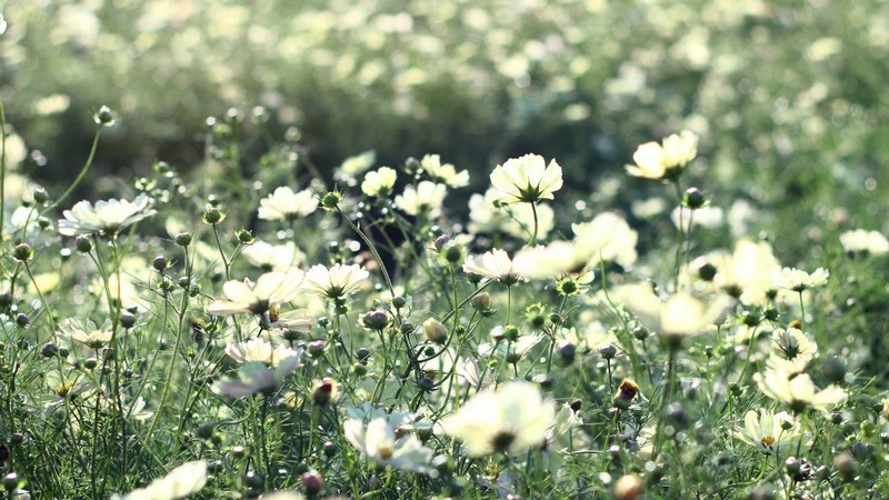 Красивые фотографии с цветами и насекомыми