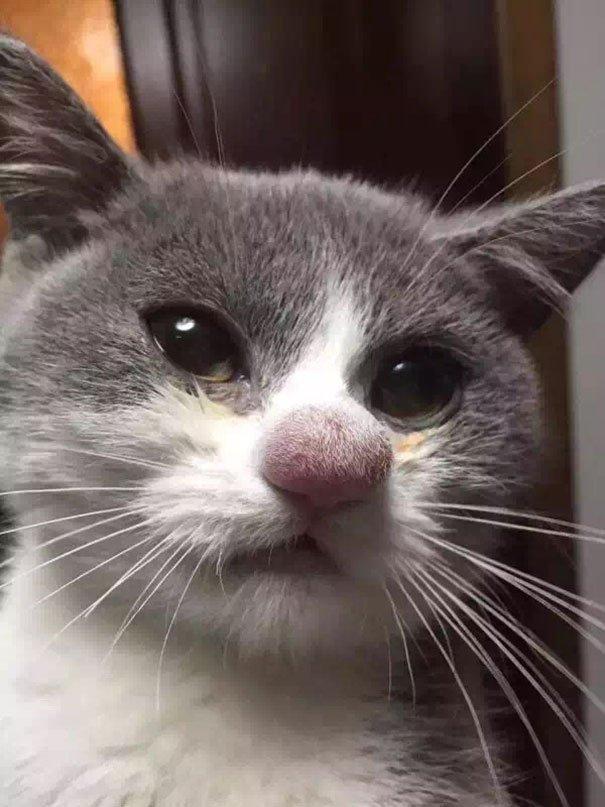 Кошки, которые играли с пчелой