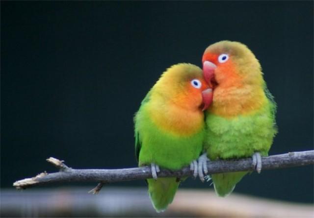 Влюбленные животные выражают свои чувства