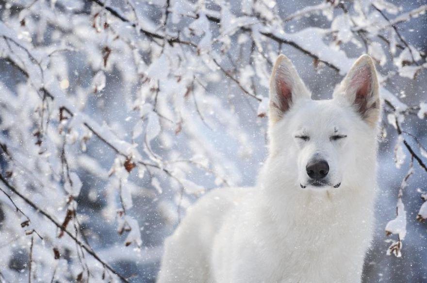 Портреты собак в объективе фотографа Анны Гейер