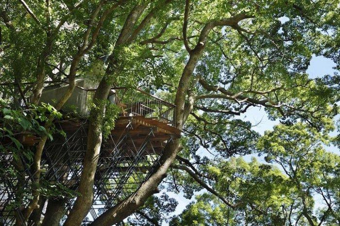 Самый большой домик на дереве в Японии