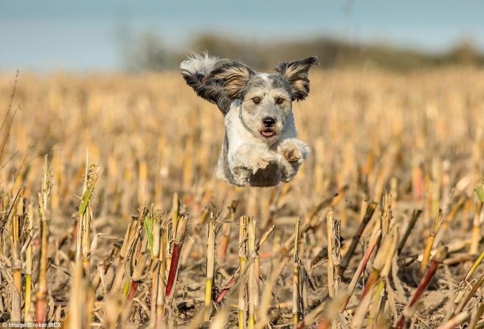 Собаки бросили вызов гравитации на фотографиях Джека Брэдли