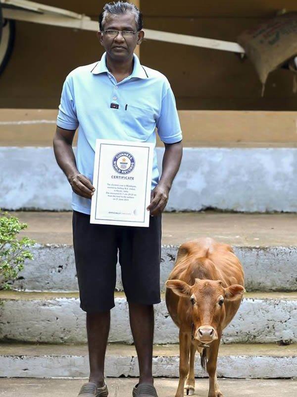 Удивительные рекорды среди животных