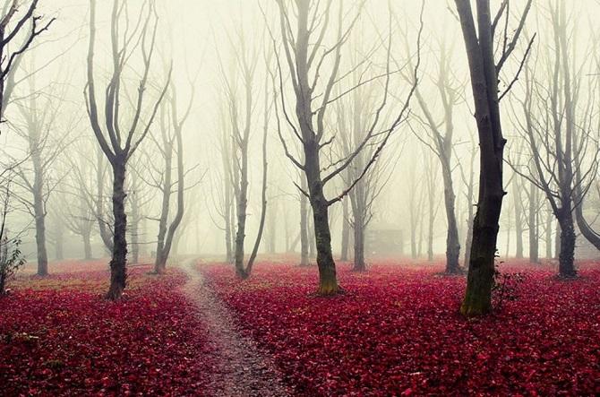 Леса в которых хочется заблудиться