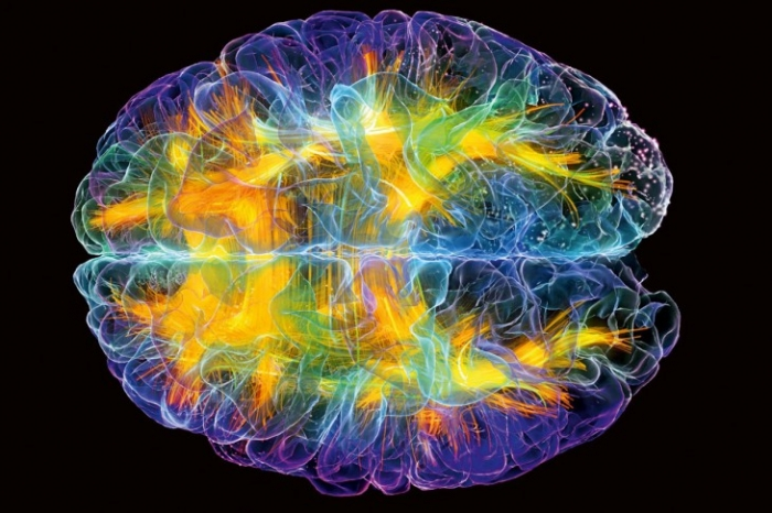 5 интересных фактов о мозге