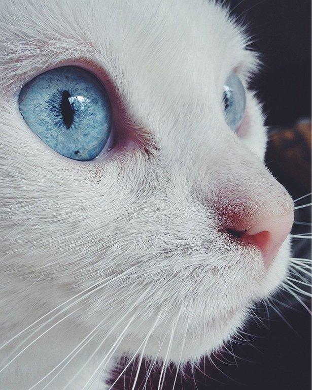 Забавные фотографии котов