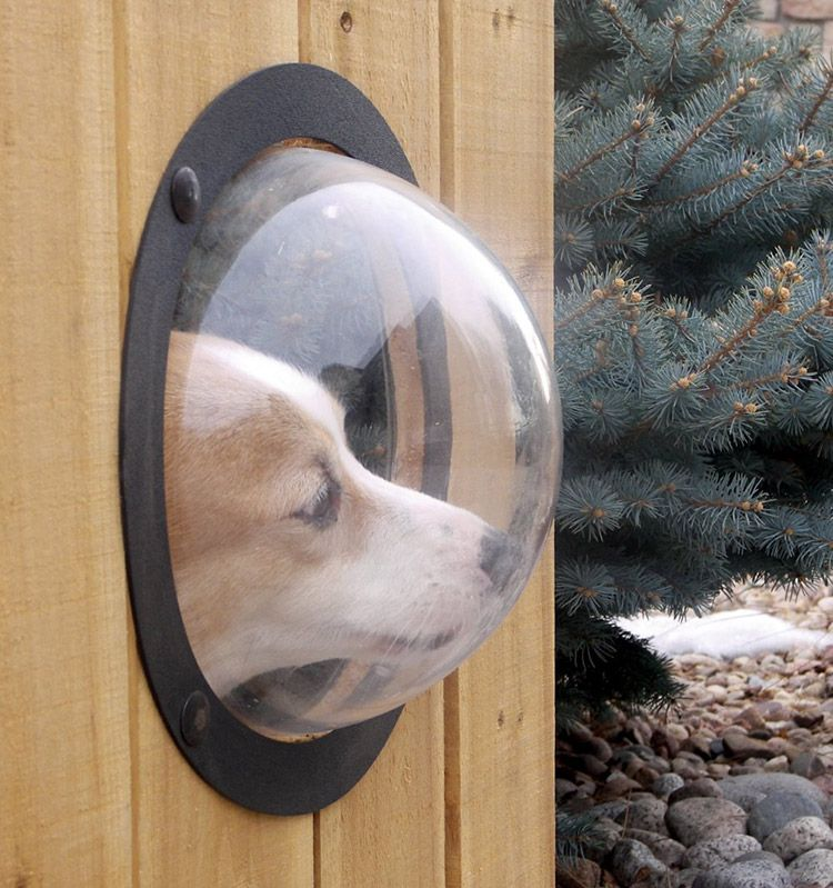 Сделай из собаки космонавта - иллюминатор для забора