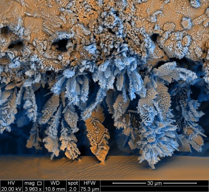 Удивительные снимки, сделанные под микроскопом