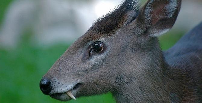Интересные примеры адаптаций из мира животных