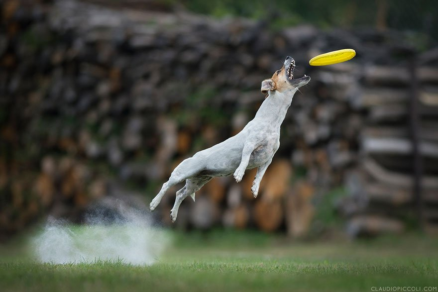 Летающие собаки от Клаудио Пикколи