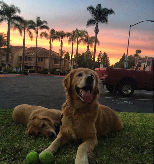 Очаровательные собаки на фотографиях поднимут вам настроение