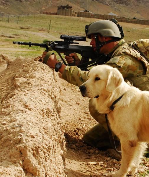 Собаки на службе