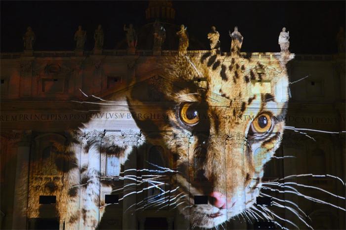 Ватикан выступил в поддержку вымирающих видов животных