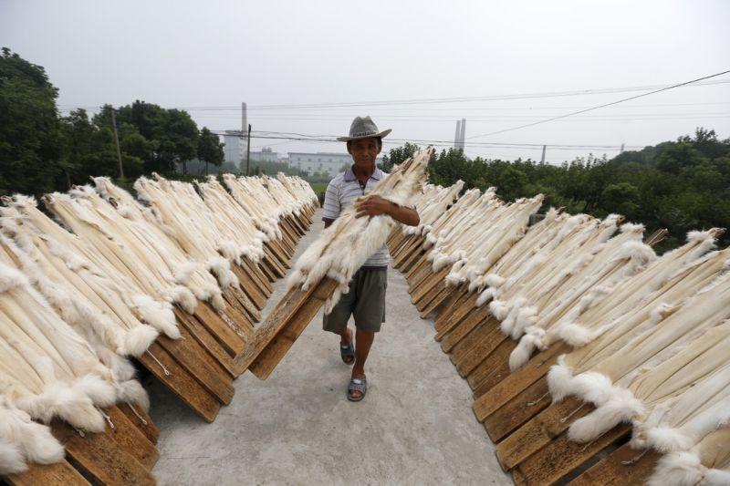 Кровавая меховая индустрия Китая