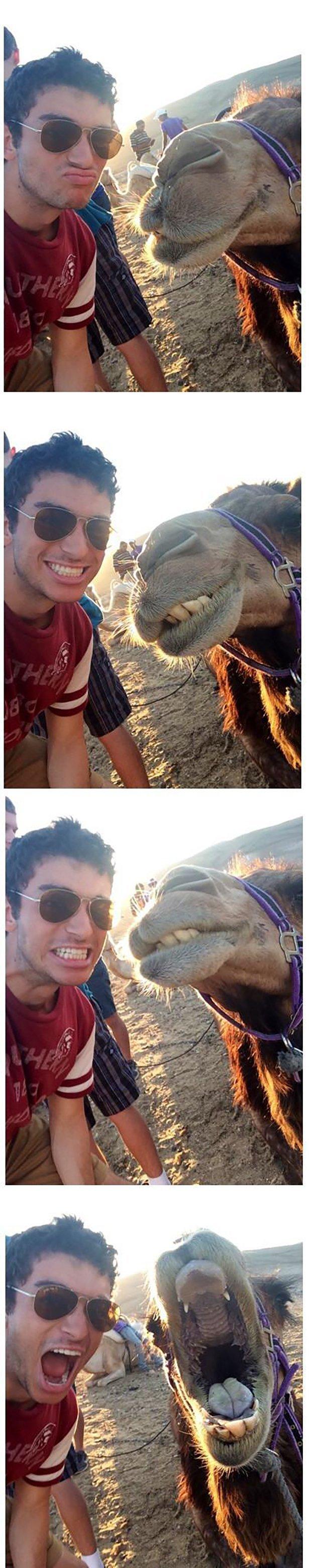 Селфи с животными
