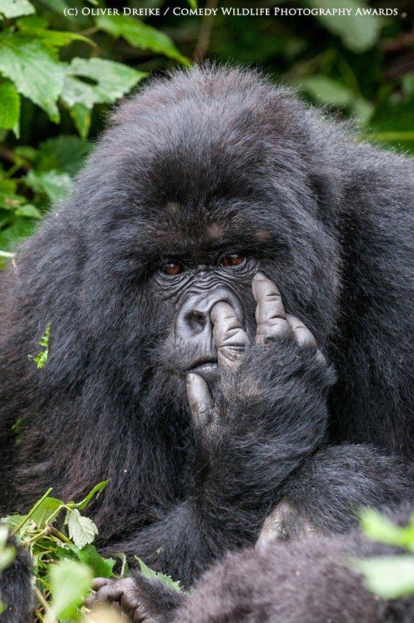 Лучшие снимки фотоконкурса The Comedy Wildlife Photography Awards