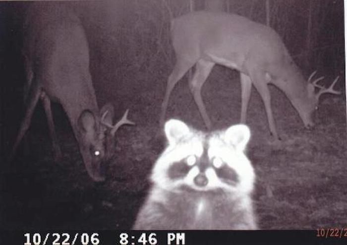 Странные снимки, сделанные фотоловушками