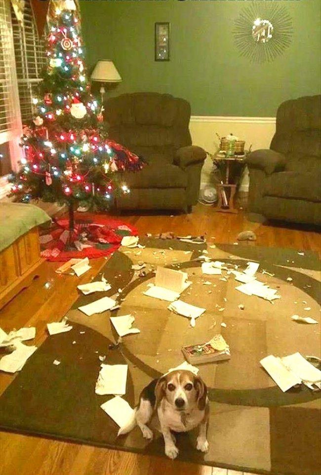 Забавные домашние питомцы и новогодние елки