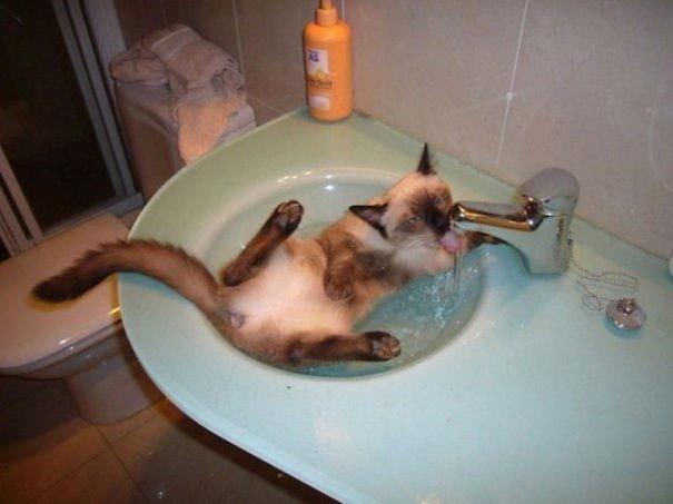 Коты, которые обожают водные процедуры