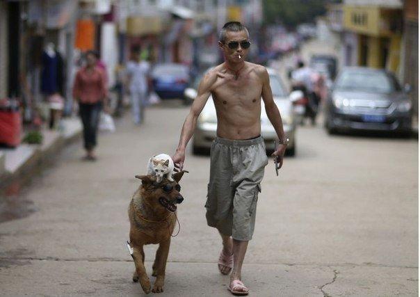 Кошка и собака: лучшие друзья