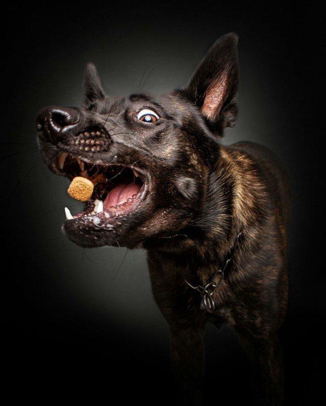 Гамма забавных эмоций у собак, ловящих еду