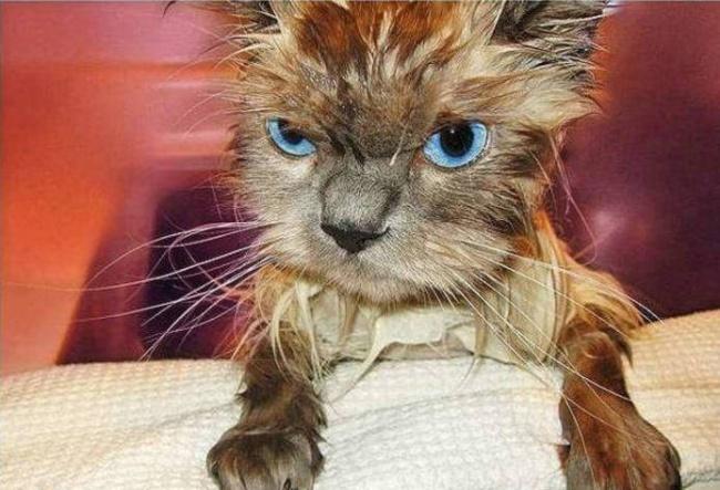 Мокрые и смешные фотографии животных, которых только что искупали