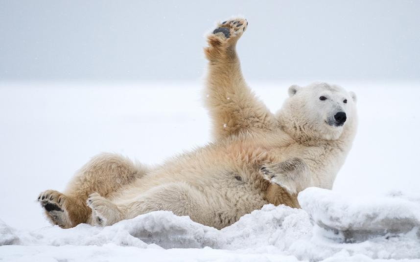 Субботнее, картинки приколы арктика