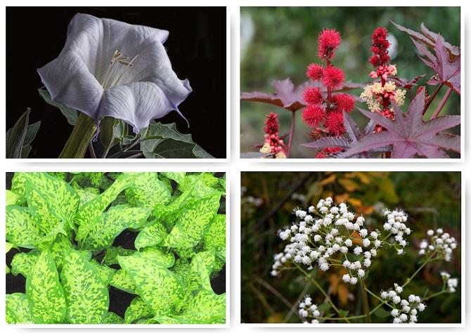 10 самых смертоносных растений в мире