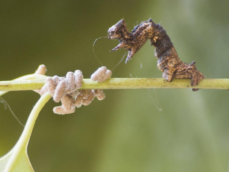 10 удивительнейших способностей паразитов
