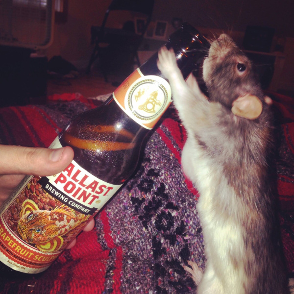 Любители выпить из мира животных