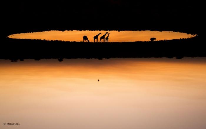 Лучшие фотографии диких животных Wildlife Photographer of the Year
