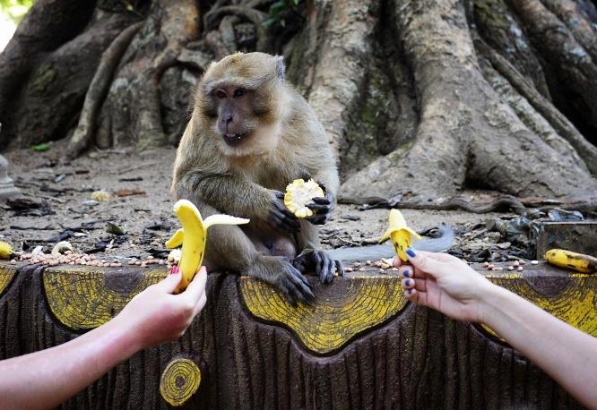 Несколько любопытных фактов про обезьян