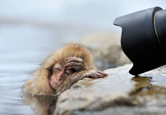 Животные, как будто с похмелья