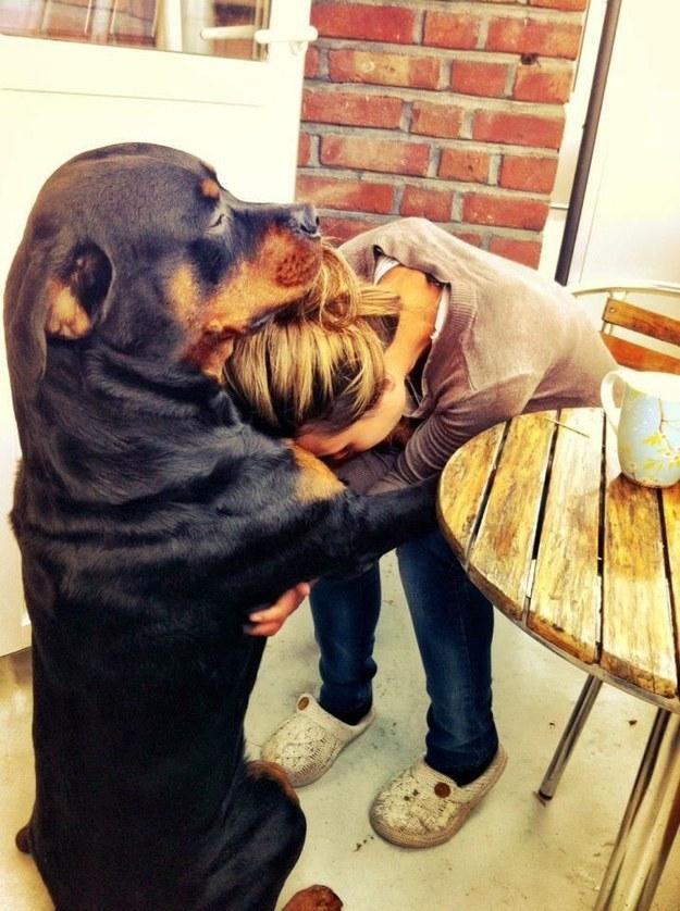 Причины быть благодарным вашей собаке