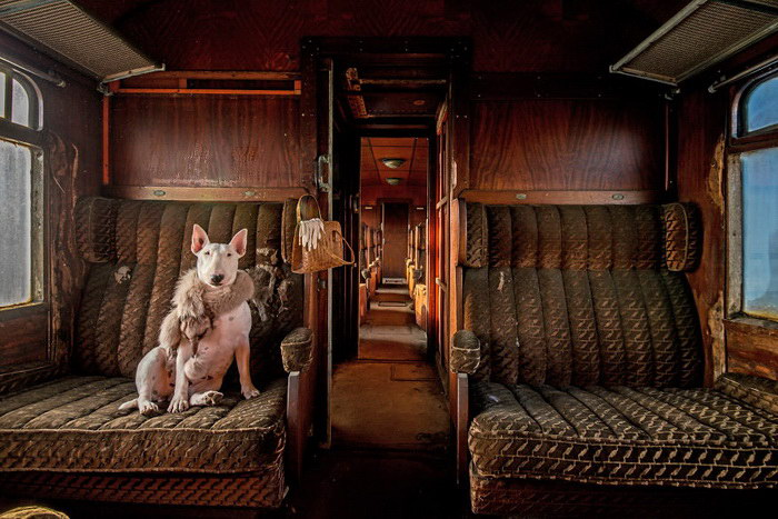 Путешествие с бультерьером от Элис ван Кемпен