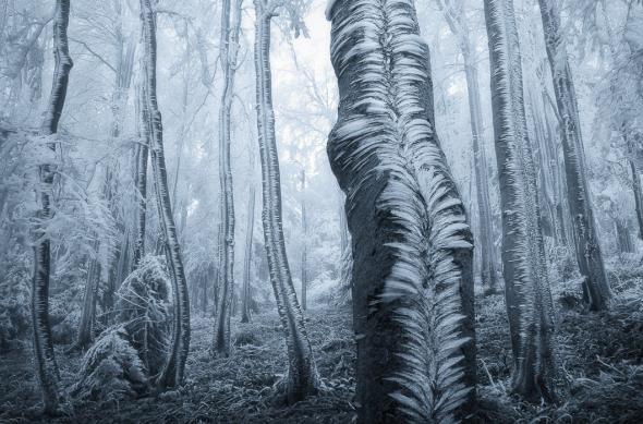 Мистические леса