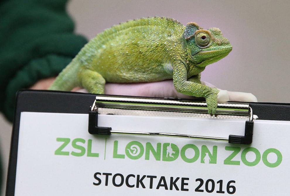 Перепись населения лондонского зоопарка 2016