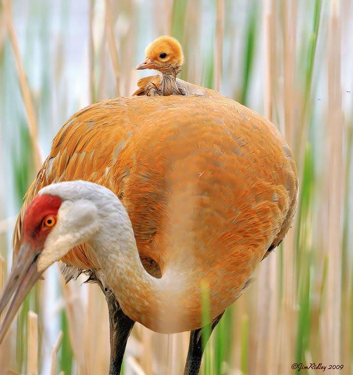 Птицы со своими птенцами