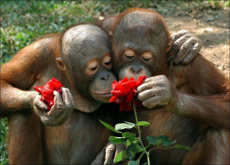 Животные любят цветы