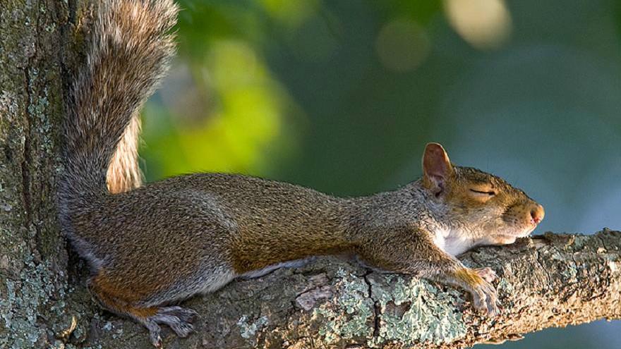 10 удивительных фактов о том, как спят некоторые животные