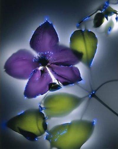 Сияние цветов и растений от Роберта Бьюелтмана