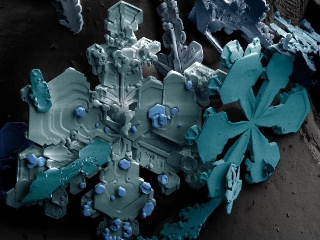25 привычных вещей под микроскопом