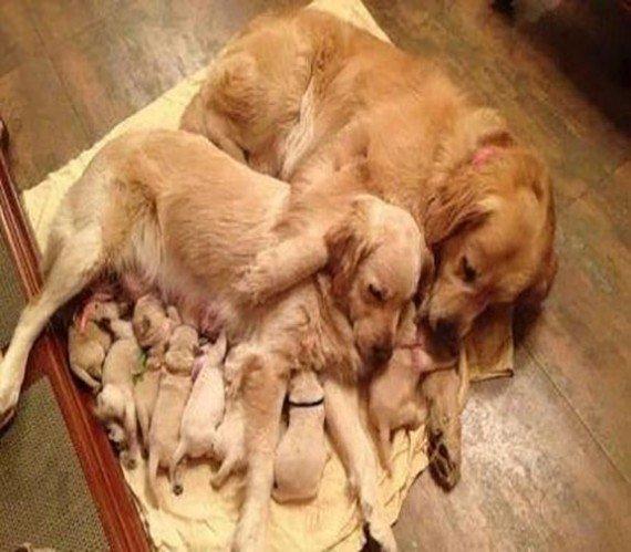 Семейные фотографии из мира животных