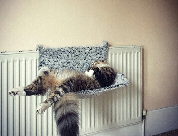100 животных, которые спят где хотят