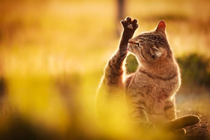 Фотографии кошек от Сэйдзи Мамия