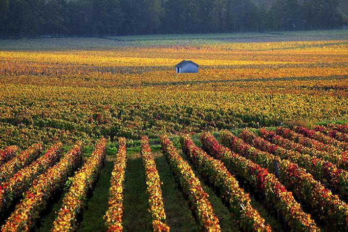Куда лучше поехать за молодым вином
