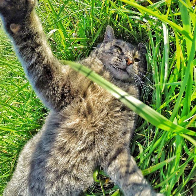 Мэнни - кот, который знает толк в селфи