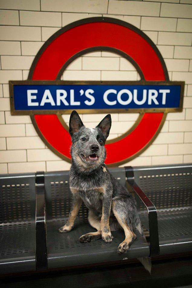 Жизнь лондонского пса Руперта
